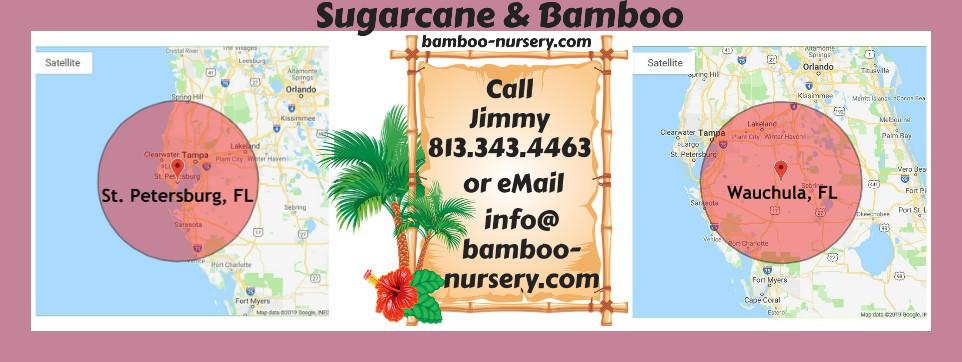 Sugarcane & Bamboo-Nursery Dot Com Counties Cities We Serve Florida border